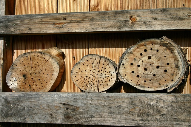 Bee Hotel Using Log Slices